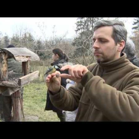 2015marcius ZTV Zoldovezet madargyuruzes Botfan